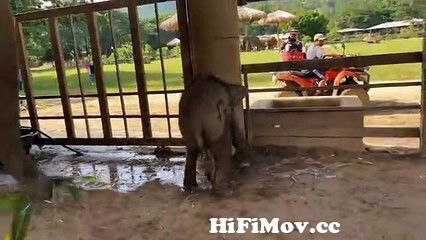 View Full Screen: rescued baby elephant has the most adorable first bath.jpg